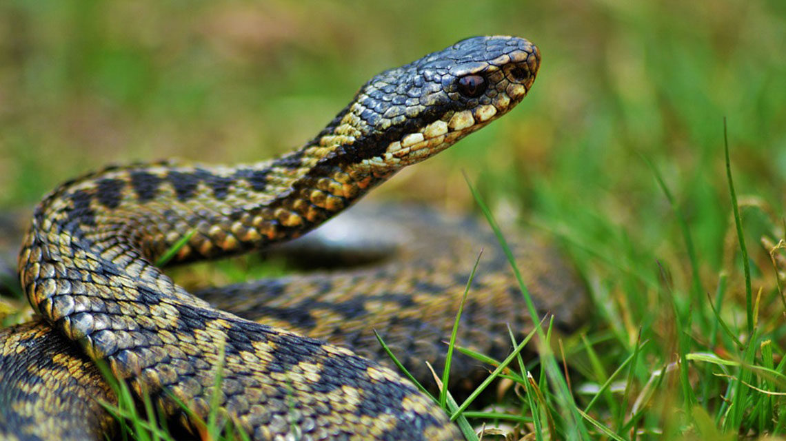 Как уберечься от укуса змеи